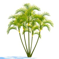 3d dypsis lutescens model