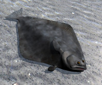 atlantic halibut 3d model