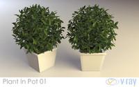 plant pot 01 obj