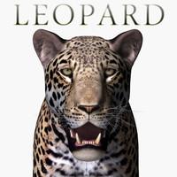realistic leopard x