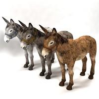 donkey max