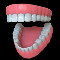 human jaws teeth 3d model