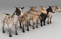 3d model goats