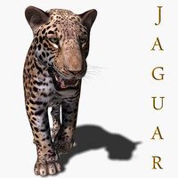 Realistic Jaguar (no fur)