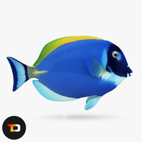 blue sea fish obj