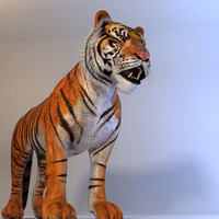 realistical tiger animation 3d model