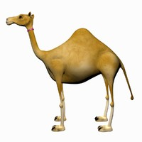 Cartoon Camel Rigged