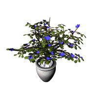 indoor plant 3d obj