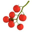 Cherry Tomato 3D models