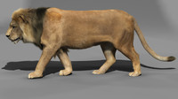 3d lion cat