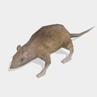 rat animal max