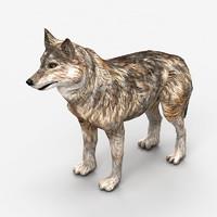 3d wolf dog animal model