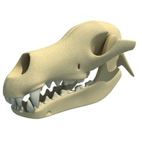 3d model dog skull skeleton