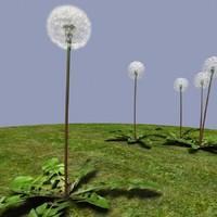 dandelion 3ds