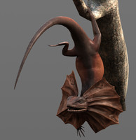 frilled lizard 3d obj