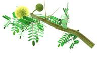3d model of acacia arabica arabic