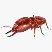 3d model of termite insect