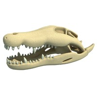 crocodile skull skeleton 3d model