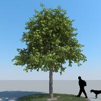 3d realistic linden tree leaf