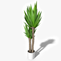 tropical house plant max