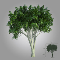 High realistic tree 001