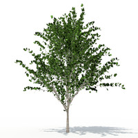 3ds max deciduous tree