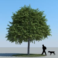 realistic maple tree max