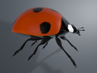 3d model ladybird insect