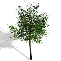 3d model tree polygons