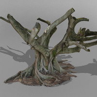 3d model australian fig tree scanned