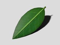 3d model green leaf