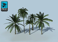3d tropical palm trees