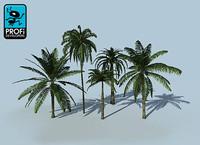 3d tropical palm trees