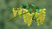 3d model grapes