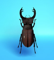 stag beetle lwo