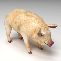 max pig