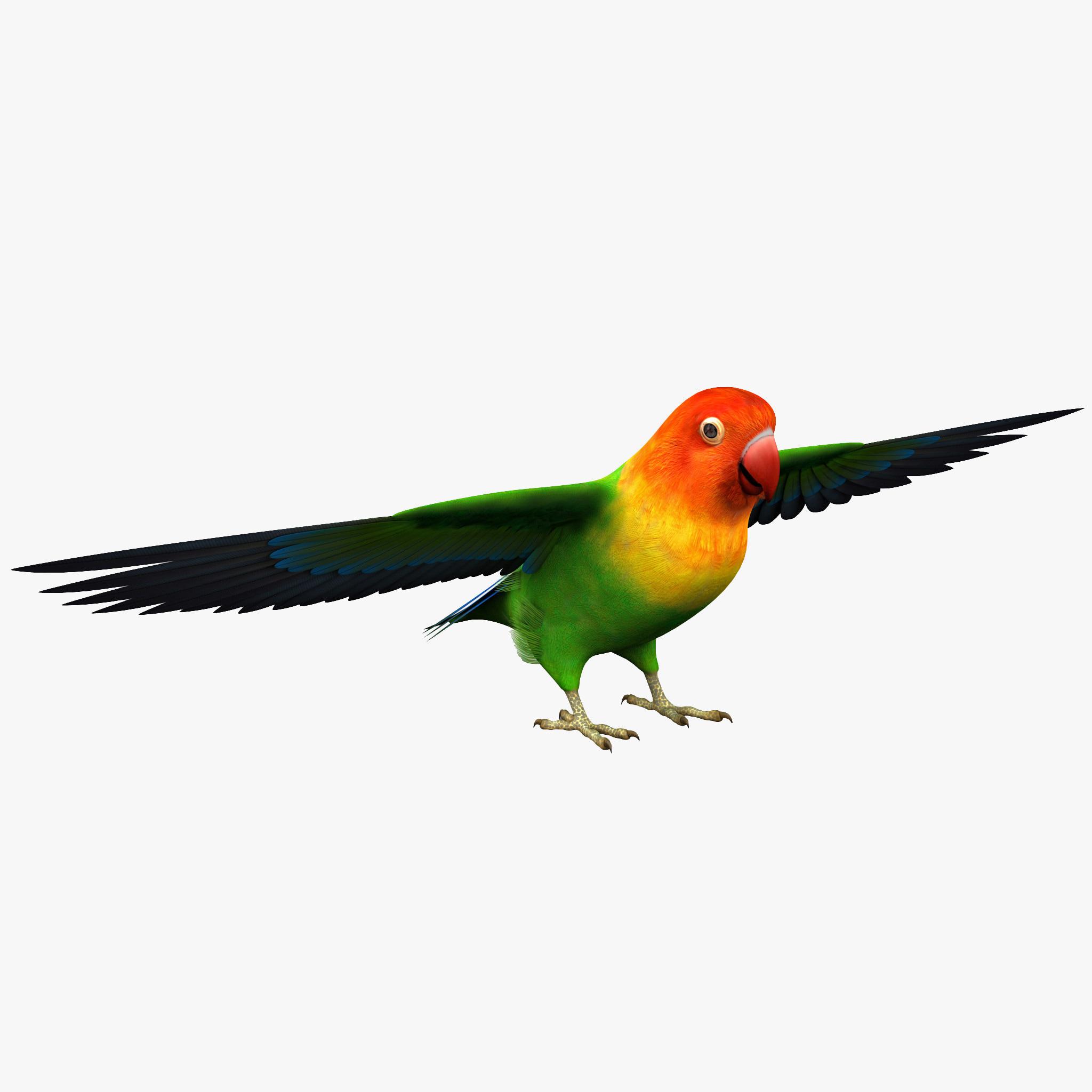 251748_Lovebird_000.jpgf6658a4c-5166-4b4c-89ac-9127c978787eOriginal.jpg