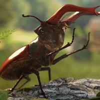 3d lucanus stag beetle cervus