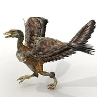 archaeopteryx 3d model