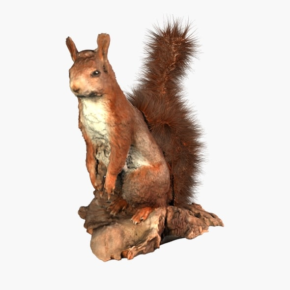 squirrel 3d model - Squirrel... by laurenstrimpe