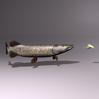 3d model northern pike