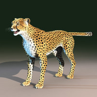 3d model cheetah cat