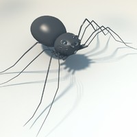 free spider arachnid 3d model