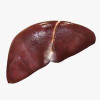 3d liver man