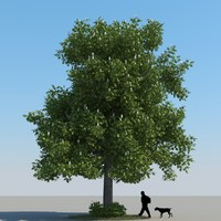 realistic chestnut tree leaf 3d max