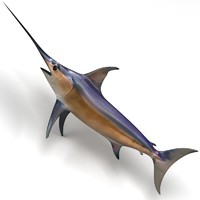 3ds max swordfish fish