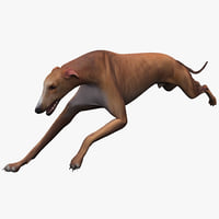 australian greyhound pose 3 3d model