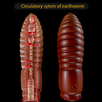 earthworm circulatory 3d model