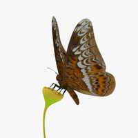 3d model tiger butterfly animation
