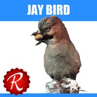 3d model jay bird